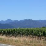 Vintur i Malborough området kendt for sine fantastiske Sauvignon Blancs